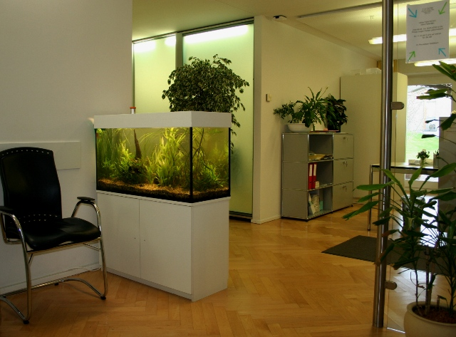 zoo thun aquaristik terraristik zoofachgesch ft heimtier. Black Bedroom Furniture Sets. Home Design Ideas