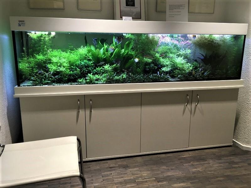 Aquarium im Wartezimmer Zahnarztpraxis