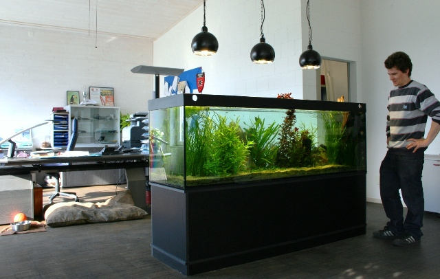Aquarium im Büro als Raumtrenner