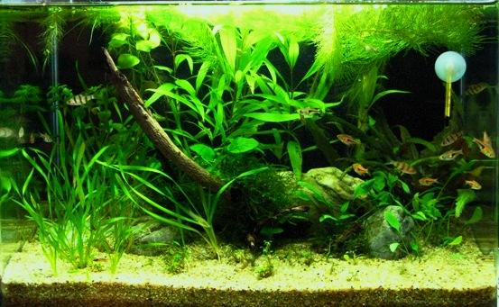 """Ein """"Antistress-Aquarium"""" gehört in jedes Büro !"""