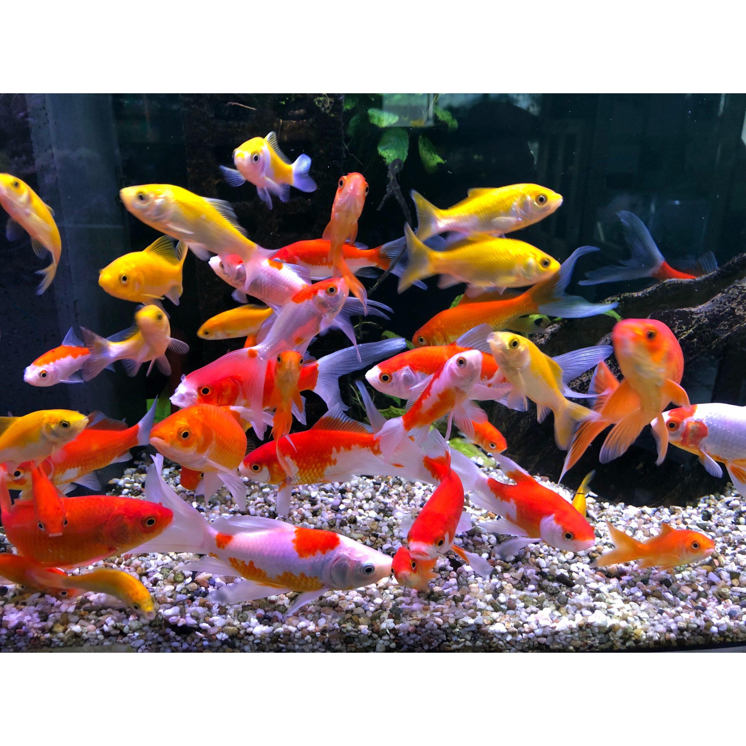 Fisch aktuell
