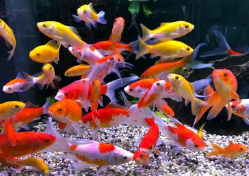 Fisch des Monats